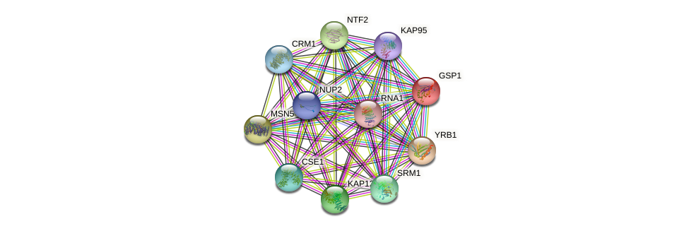 GSP1 protein (Saccharomyces cerevisiae) - STRING interaction network