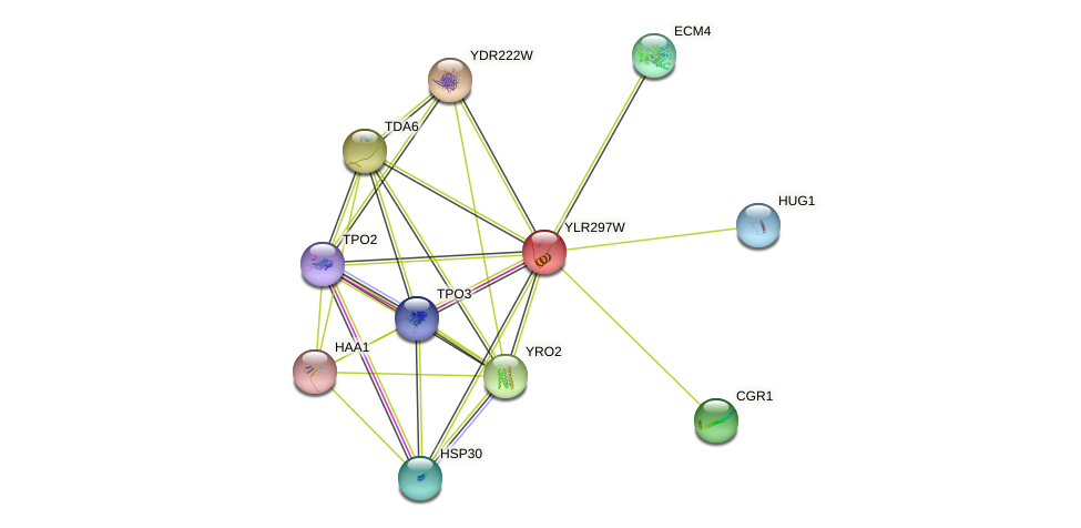 YLR297W protein (Saccharomyces cerevisiae) - STRING interaction network