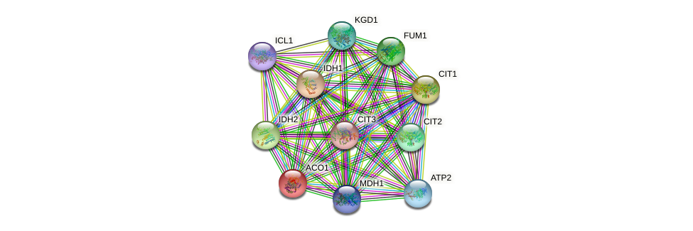 ACO1 protein (Saccharomyces cerevisiae) - STRING interaction network