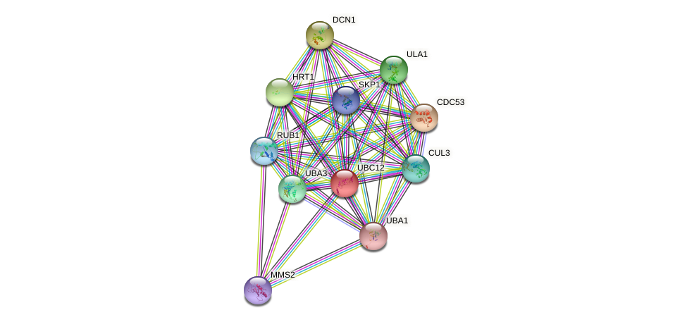UBC12 protein (Saccharomyces cerevisiae) - STRING interaction network