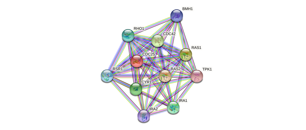 CDC25 protein (Saccharomyces cerevisiae) - STRING interaction network