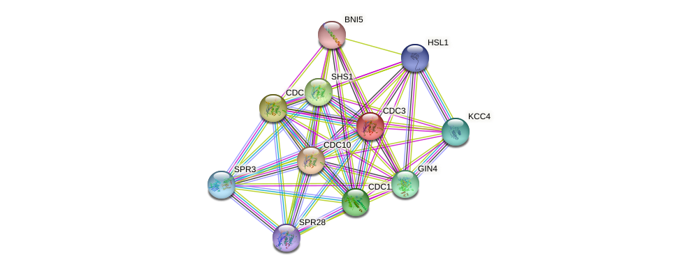 CDC3 protein (Saccharomyces cerevisiae) - STRING interaction network