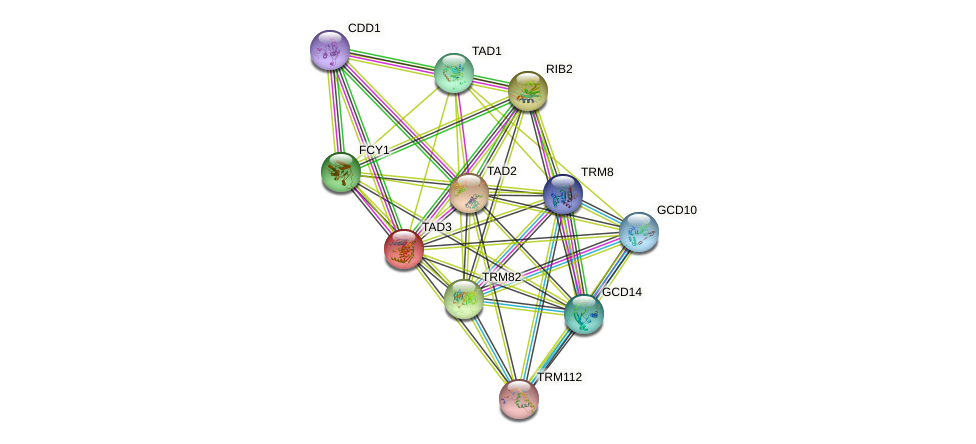 TAD3 protein (Saccharomyces cerevisiae) - STRING interaction network
