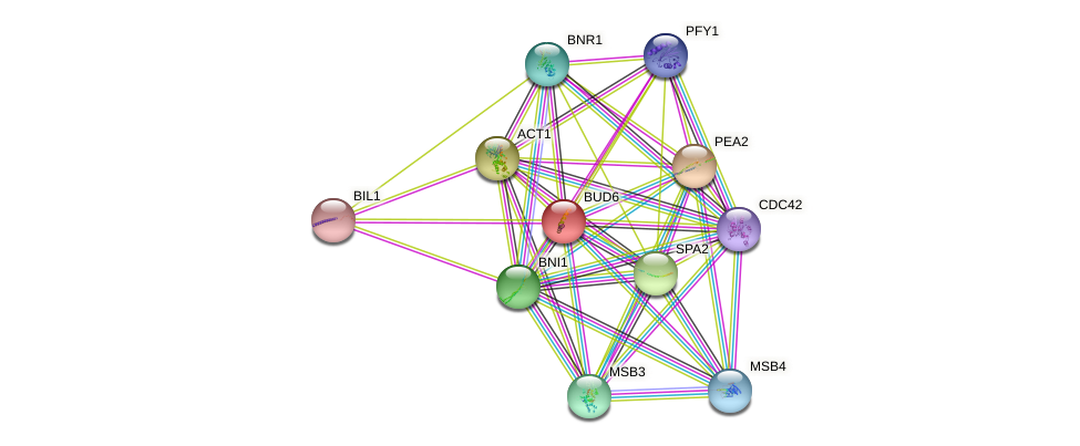 BUD6 protein (Saccharomyces cerevisiae) - STRING interaction network