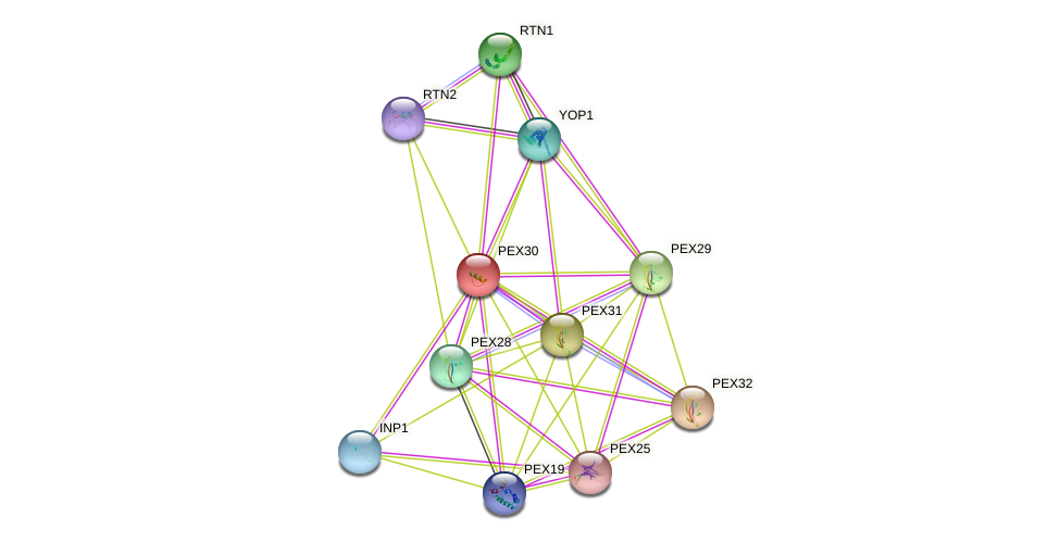 PEX30 protein (Saccharomyces cerevisiae) - STRING interaction network