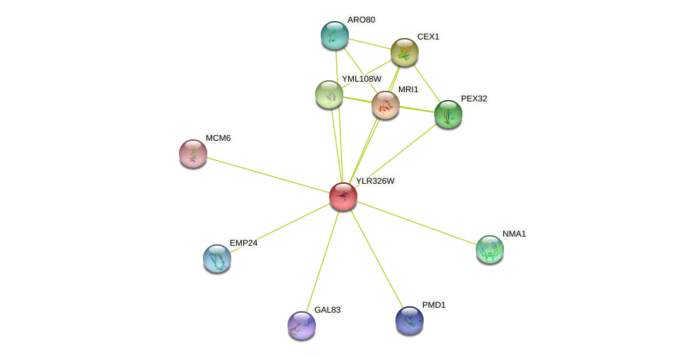 YLR326W protein (Saccharomyces cerevisiae) - STRING interaction network