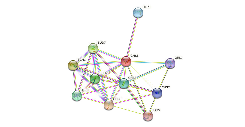 CHS5 protein (Saccharomyces cerevisiae) - STRING interaction network