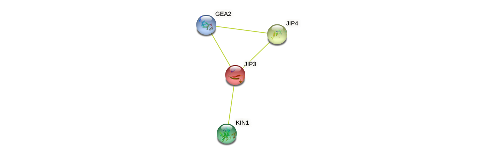 JIP3 protein (Saccharomyces cerevisiae) - STRING interaction network