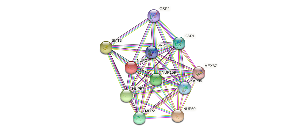 NUP2 protein (Saccharomyces cerevisiae) - STRING interaction network