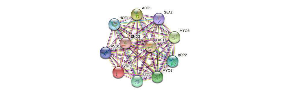 VRP1 protein (Saccharomyces cerevisiae) - STRING interaction network