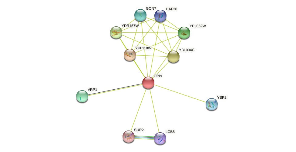 OPI9 protein (Saccharomyces cerevisiae) - STRING interaction network