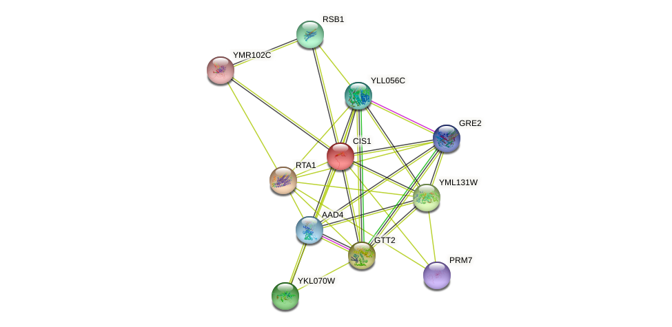 CIS1 protein (Saccharomyces cerevisiae) - STRING interaction network