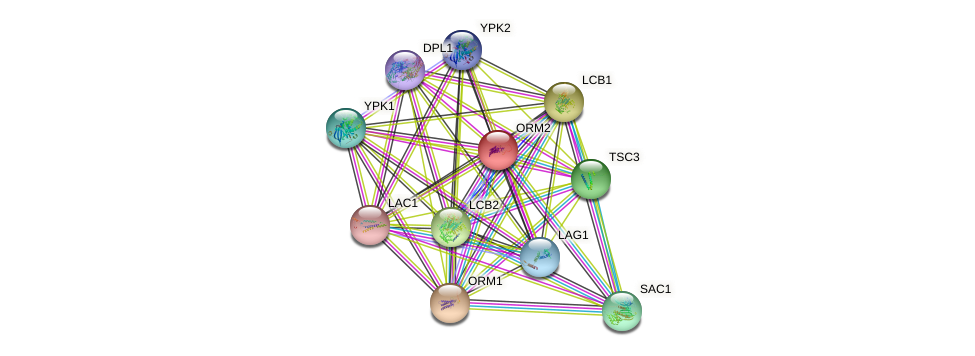 ORM2 protein (Saccharomyces cerevisiae) - STRING interaction network