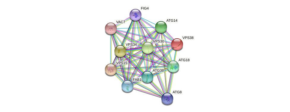 VPS38 protein (Saccharomyces cerevisiae) - STRING interaction network