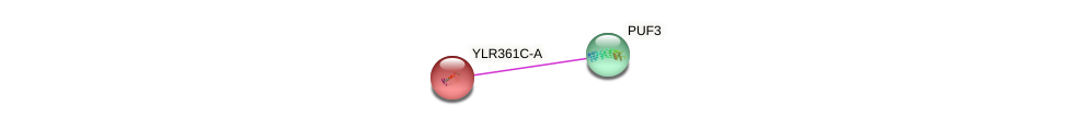 YLR361C-A protein (Saccharomyces cerevisiae) - STRING interaction network