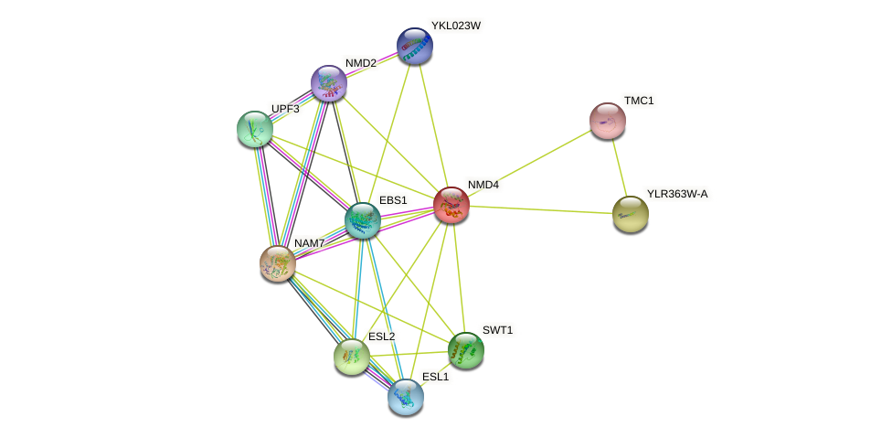 NMD4 protein (Saccharomyces cerevisiae) - STRING interaction network