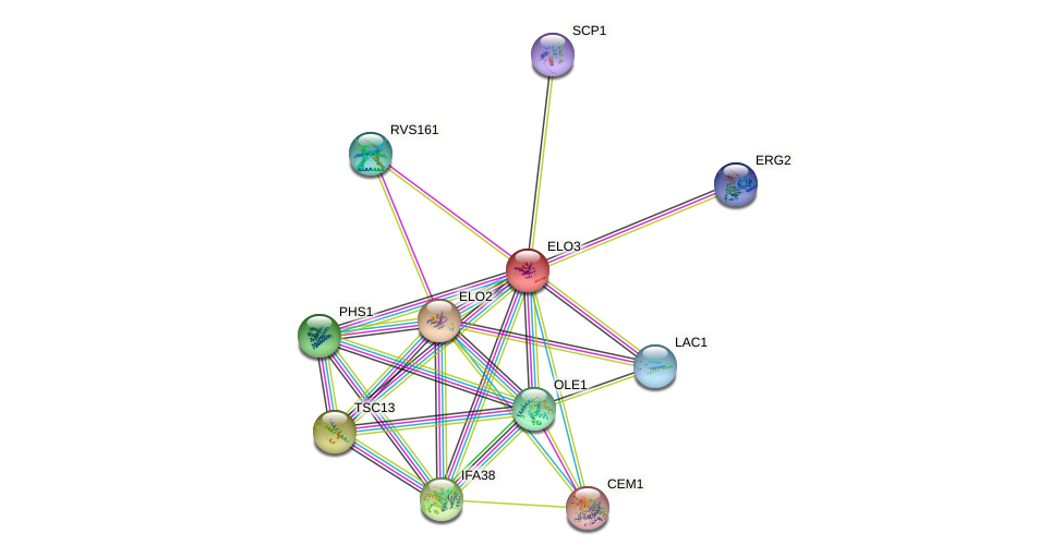 ELO3 protein (Saccharomyces cerevisiae) - STRING interaction network