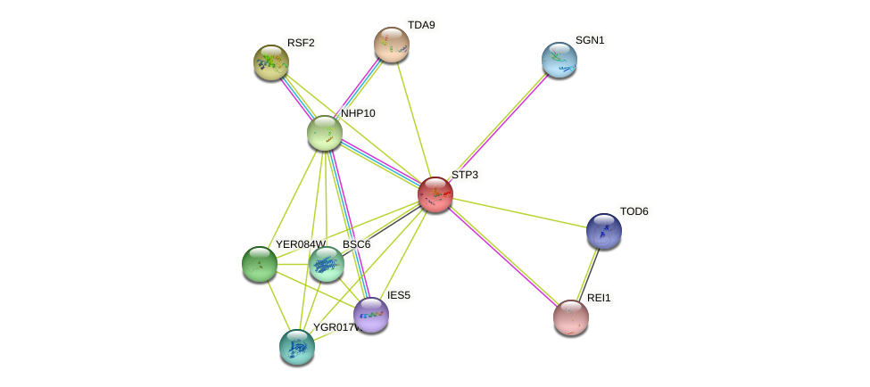 STP3 protein (Saccharomyces cerevisiae) - STRING interaction network