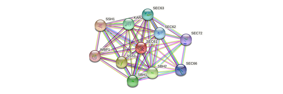 SEC61 protein (Saccharomyces cerevisiae) - STRING interaction network