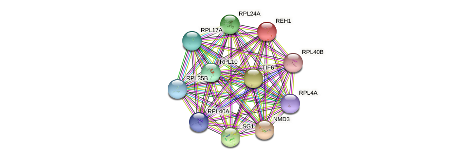 REH1 protein (Saccharomyces cerevisiae) - STRING interaction network