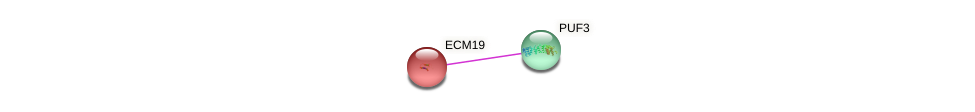 ECM19 protein (Saccharomyces cerevisiae) - STRING interaction network
