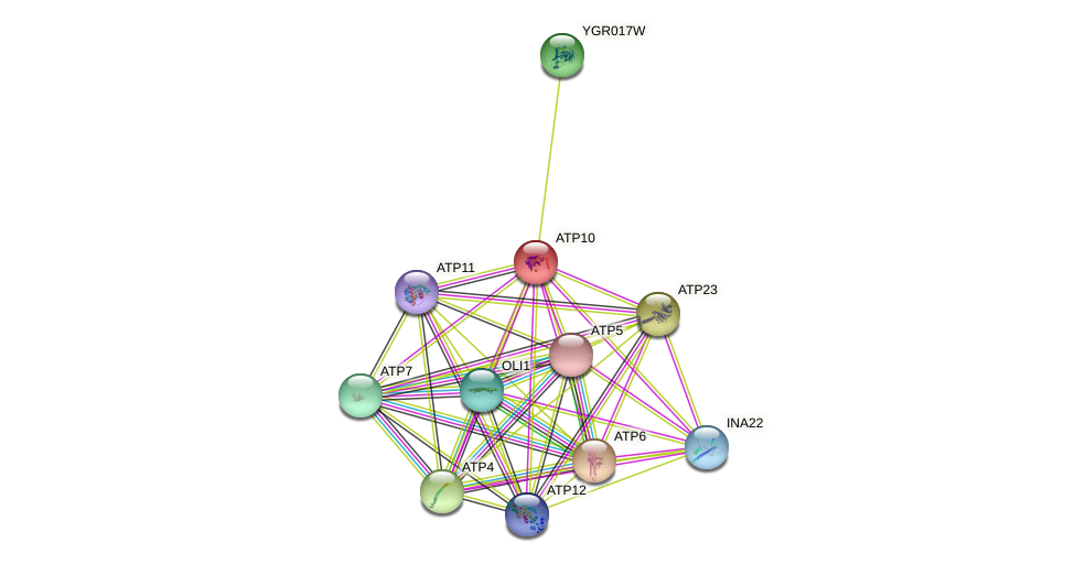 ATP10 protein (Saccharomyces cerevisiae) - STRING interaction network