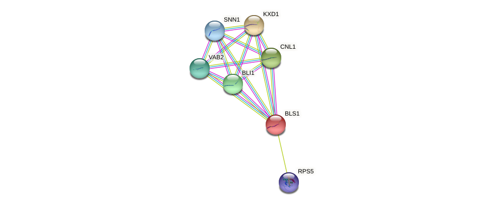 BLS1 protein (Saccharomyces cerevisiae) - STRING interaction network