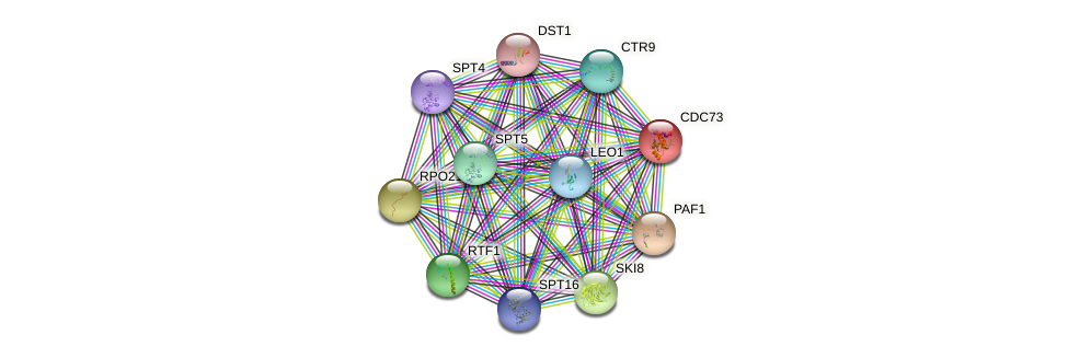 CDC73 protein (Saccharomyces cerevisiae) - STRING interaction network
