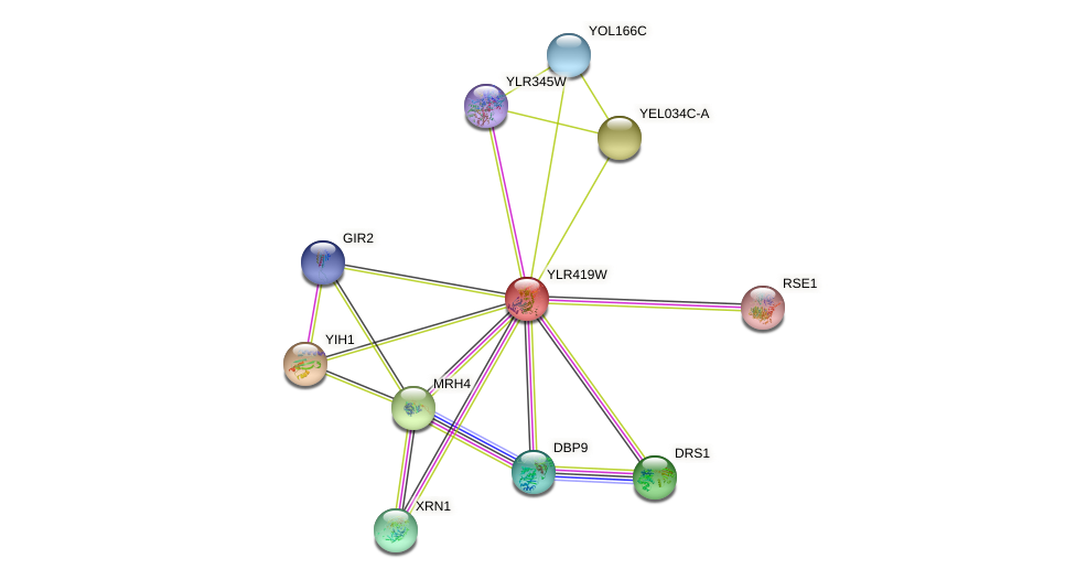 YLR419W protein (Saccharomyces cerevisiae) - STRING interaction network
