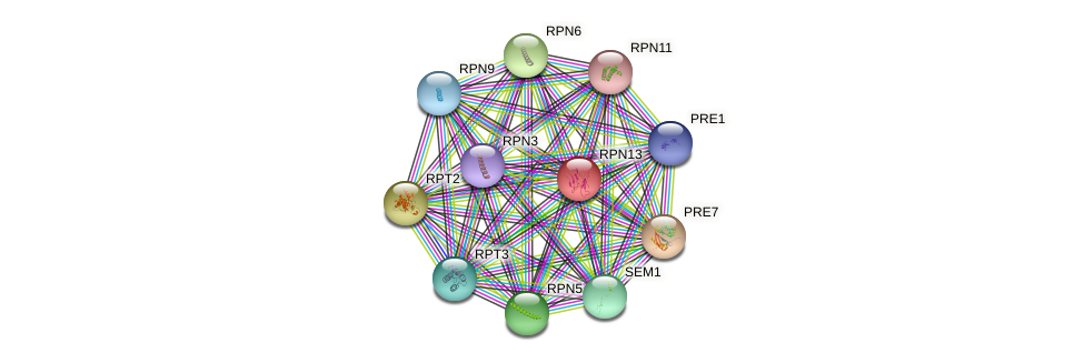 RPN13 protein (Saccharomyces cerevisiae) - STRING interaction network