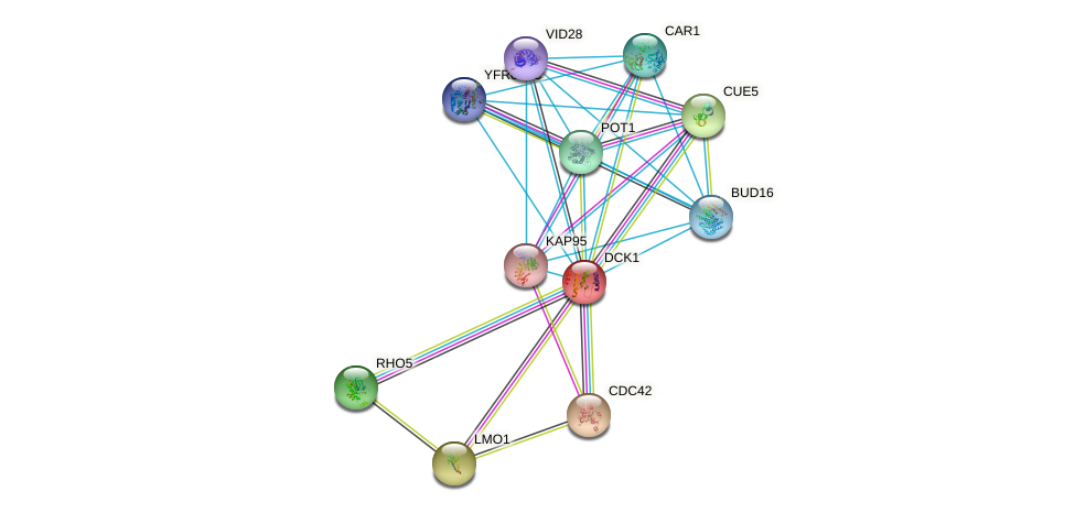 DCK1 protein (Saccharomyces cerevisiae) - STRING interaction network