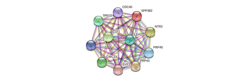 SPP382 protein (Saccharomyces cerevisiae) - STRING interaction network