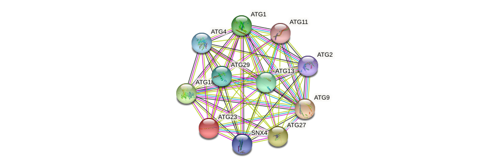 ATG23 protein (Saccharomyces cerevisiae) - STRING interaction network