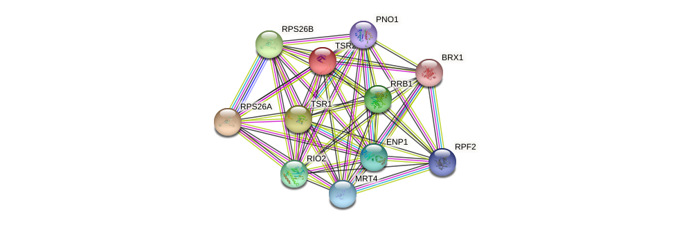TSR2 protein (Saccharomyces cerevisiae) - STRING interaction network
