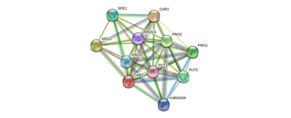 CAR2 protein (Saccharomyces cerevisiae) - STRING interaction network