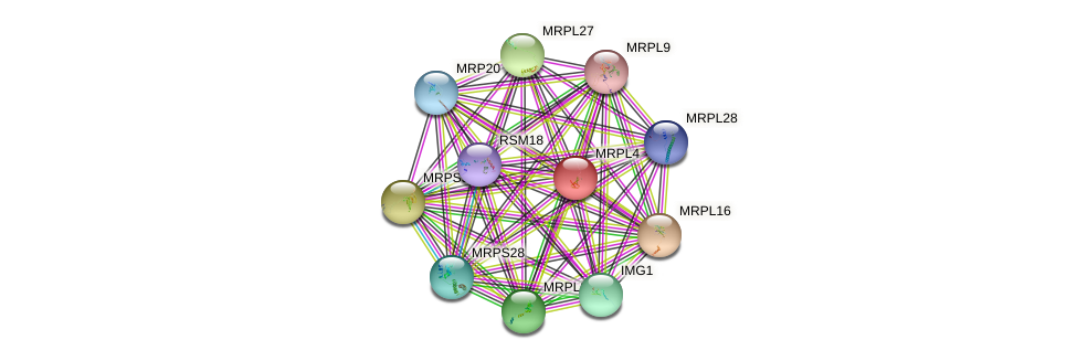 MRPL4 protein (Saccharomyces cerevisiae) - STRING interaction network