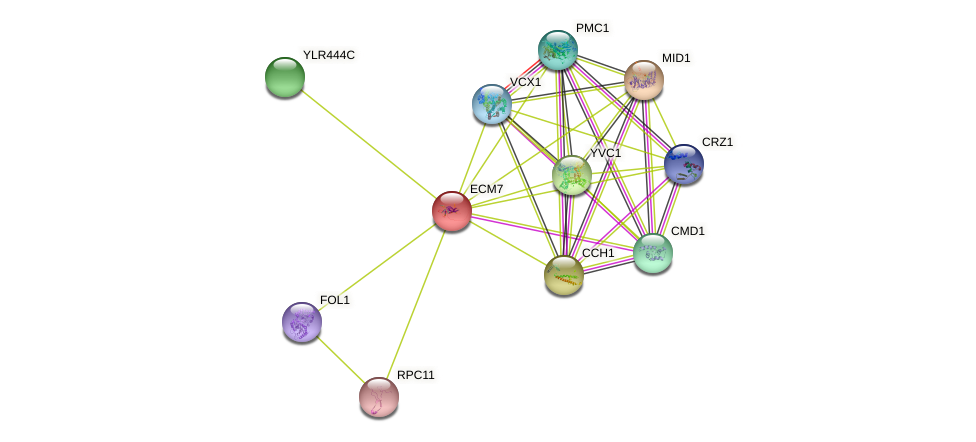 ECM7 protein (Saccharomyces cerevisiae) - STRING interaction network
