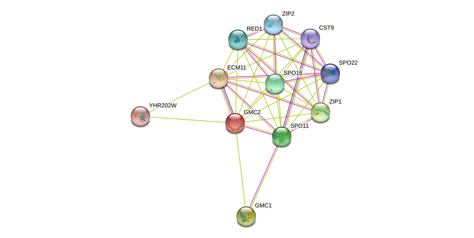 GMC2 protein (Saccharomyces cerevisiae) - STRING interaction network
