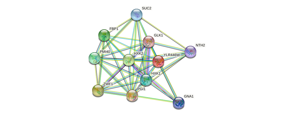YLR446W protein (Saccharomyces cerevisiae) - STRING interaction network