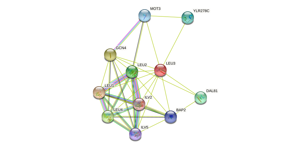LEU3 protein (Saccharomyces cerevisiae) - STRING interaction network