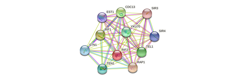 RIF2 protein (Saccharomyces cerevisiae) - STRING interaction network