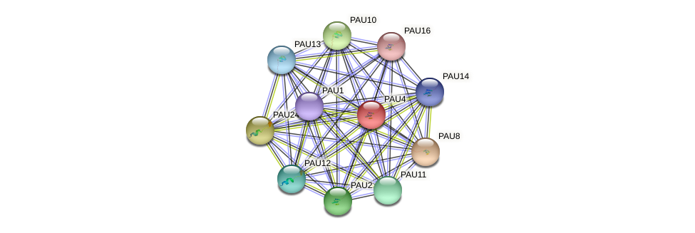 PAU4 protein (Saccharomyces cerevisiae) - STRING interaction network