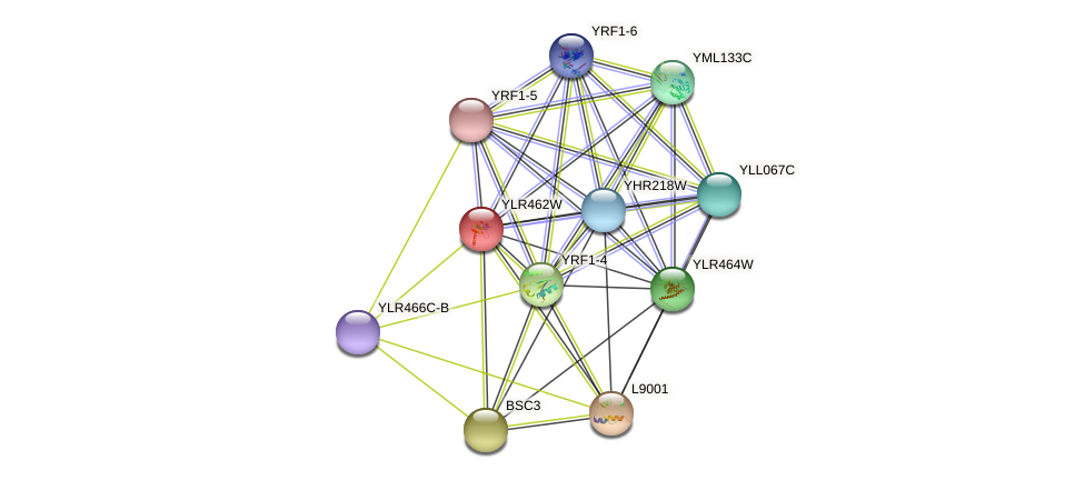 YLR462W protein (Saccharomyces cerevisiae) - STRING interaction network