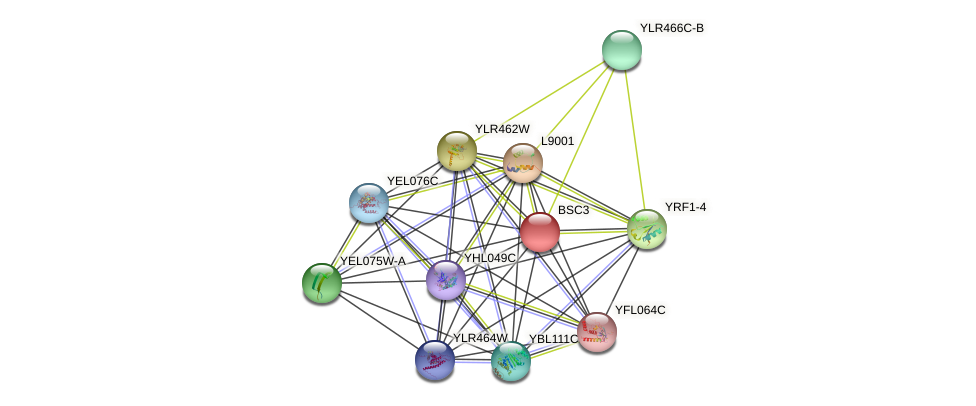BSC3 protein (Saccharomyces cerevisiae) - STRING interaction network