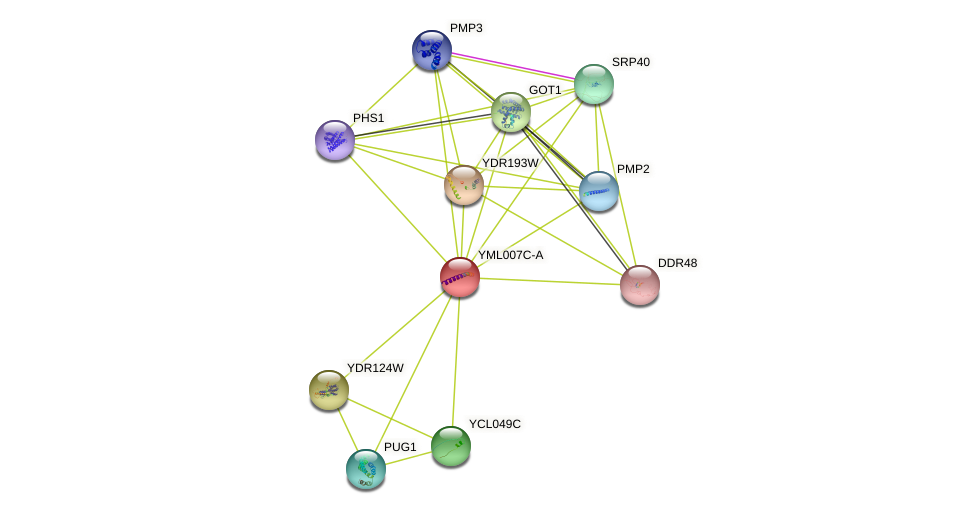 YML007C-A protein (Saccharomyces cerevisiae) - STRING interaction network