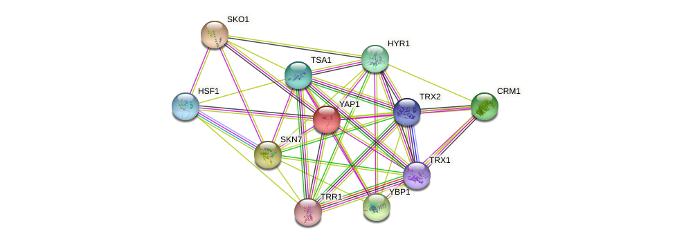 YAP1 protein (Saccharomyces cerevisiae) - STRING interaction network