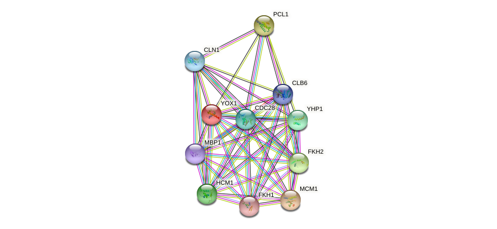 YOX1 protein (Saccharomyces cerevisiae) - STRING interaction network