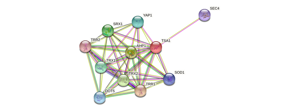 TSA1 protein (Saccharomyces cerevisiae) - STRING interaction network
