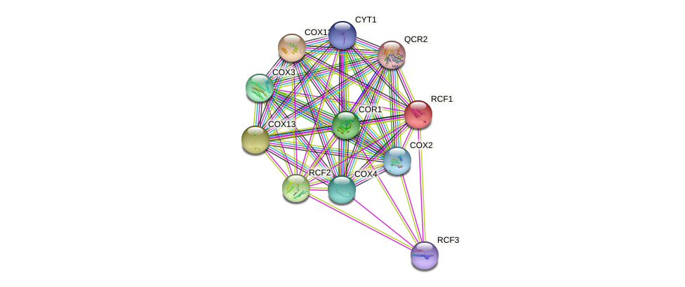 RCF1 protein (Saccharomyces cerevisiae) - STRING interaction network