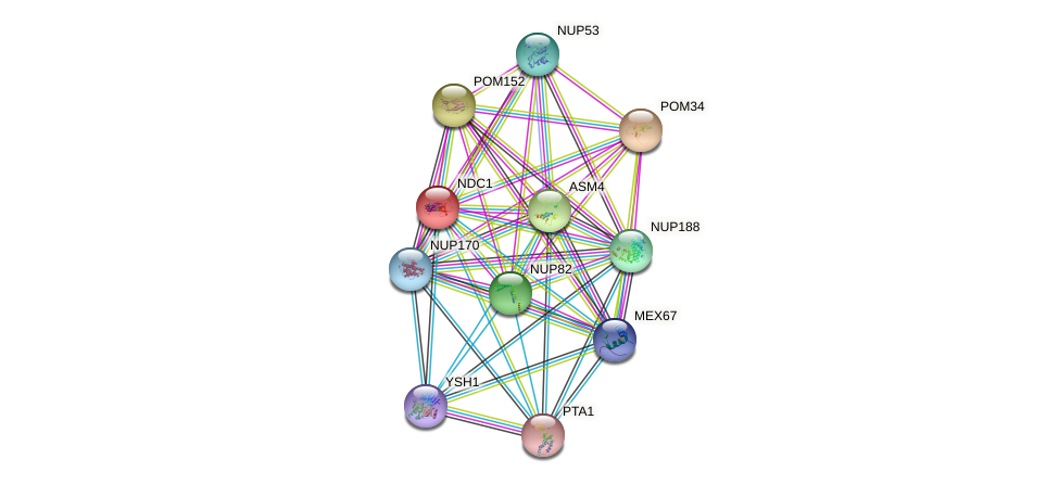 NDC1 protein (Saccharomyces cerevisiae) - STRING interaction network
